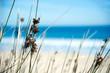 Leinwanddruck Bild - Gräser am Sandstrand