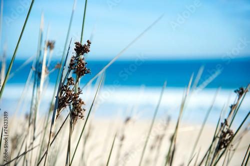 Plexiglas Zee / Oceaan Gräser am Sandstrand
