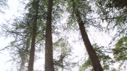 Trees _04
