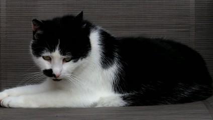 Katze liegt auf Gartenstuhl