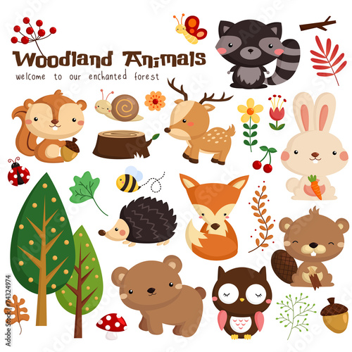 Animal woodland vector set - 74324974