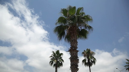 palm in Turkey