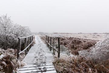 Wandersteg im  Winter Hohen Venn
