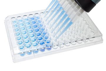 multichannel pipette test sample on 96 wells plate