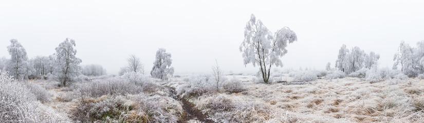 Winterlandschaft Hohes Venn panorama