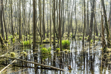 famous swamp area in usedom national park