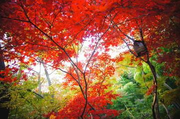 横浜、三渓園内の紅葉と鳥小屋