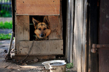 dog, pet, home, guard, house, country,