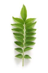 curry leaf, curry tree