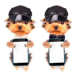 A dog wearing a cap with phone