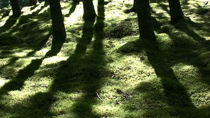 Shadows playing i forest