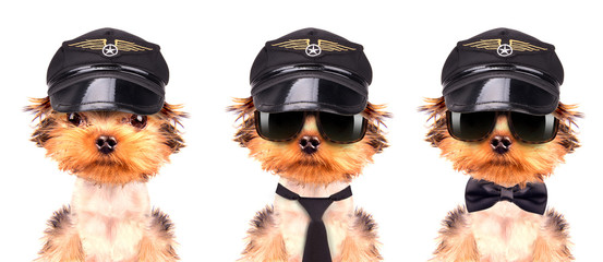 dog  dressed as pilot