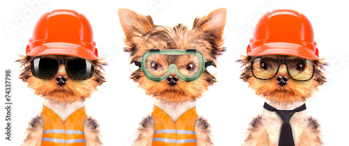 Papiers peints Porter dog dressed as builder