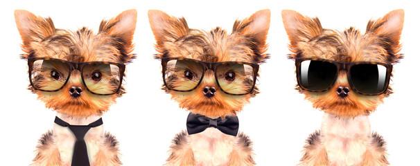 dog wearing a shades