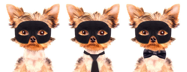 super hero puppy dog