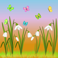 snowdrop and butterflies illustration