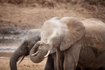 elefanti lavano sabbia