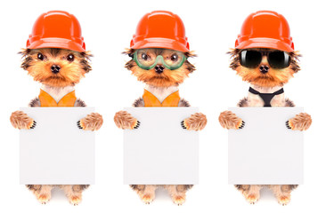 dog  dressed as builder with banner