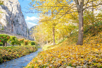 The creek and the maple trees in autumn, Abruzzo, Italy