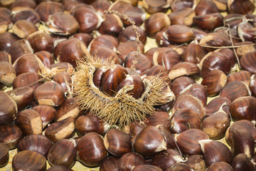 Fallen chestnuts and a hedgehog