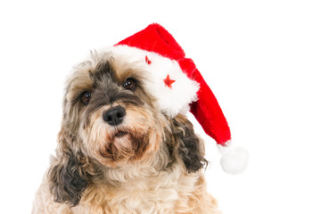 Crossbreed dog with Santa hat