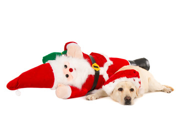Exhausted Santa and his labrador flat on the ground