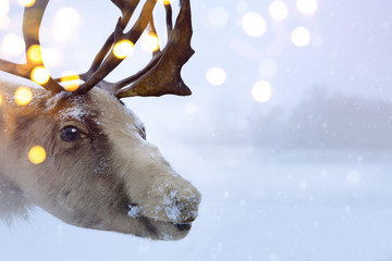 Christmas northern deer
