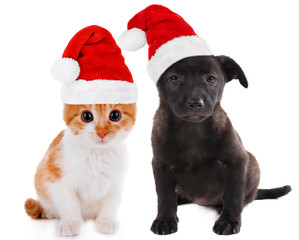Little kitten and puppy isolated on white