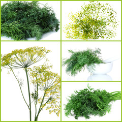 Fresh dill collage