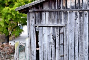 Abandoned Shed with Pine