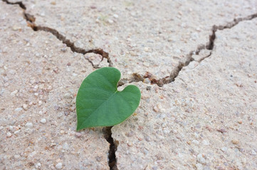 Heart-shaped leaves on dried land,cracked earth / love the world