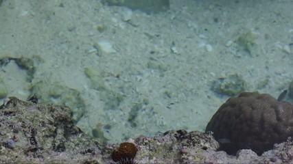 潮だまりの小魚