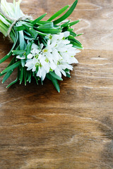 spring snowdrops on wooden background