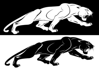 The silhouettes of the white and the black panthers