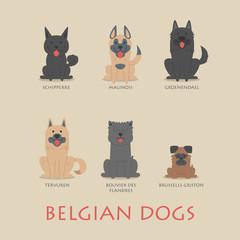 Set of belgian dogs