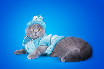 kitten in winter costume isolated on a blue background