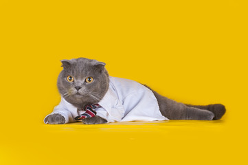 cat dressed as a manager on a yellow isolated background