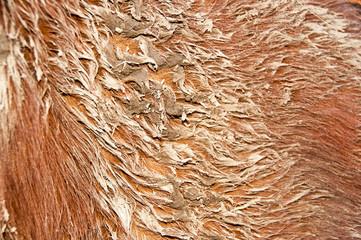 Mud stuck to a horses coat