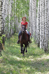Horseback trail ride in birch forest