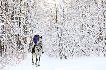 Rider on horse at edge of snow covered woodland in winter