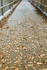 passage with fallen yellow leaves and selective focus