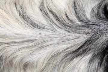 Goat skin