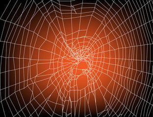 white spider web on sunset background