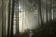 Sunbeams enter the misty coniferous forest at dawn