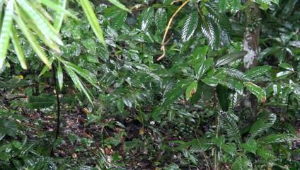 tropical rain in asian rain forest