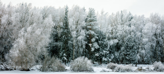 Winter Landscape with Snow and Trees