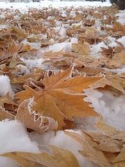 kış ve sonbahar yaprakları