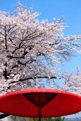 桜と野点傘