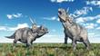 Dinosaur Diabloceratops - 74379924