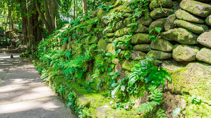 pavement with stone wall in monkey forest, ubud
